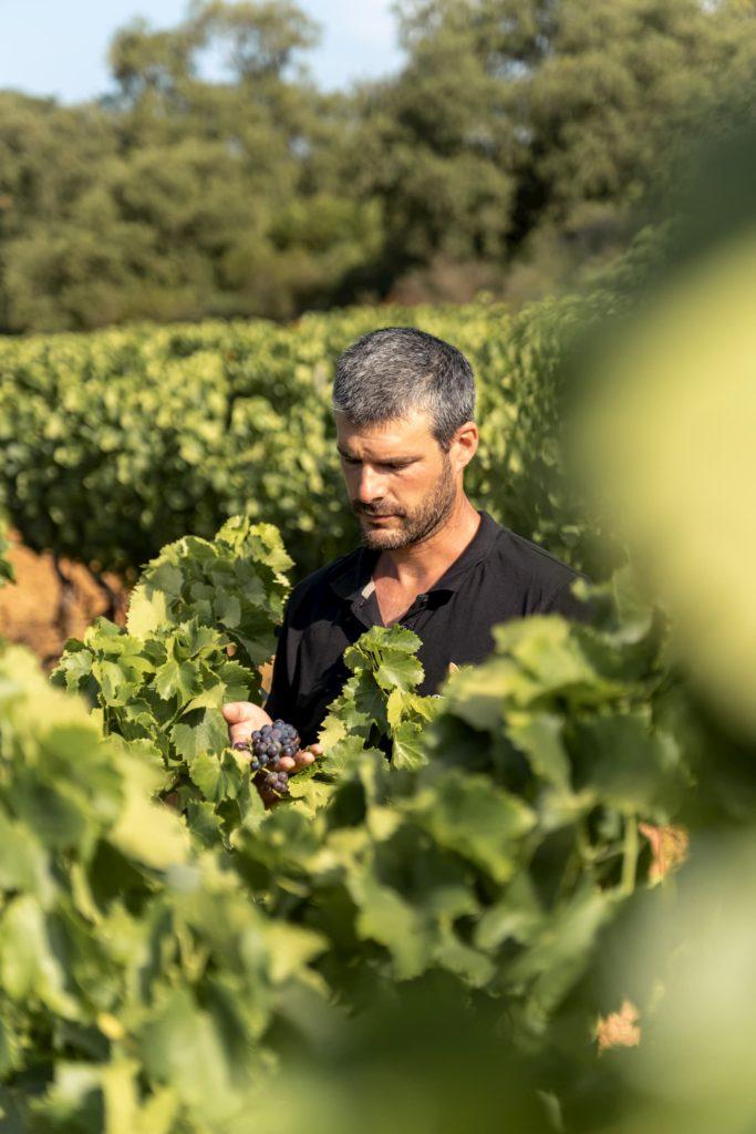 Domaine de Tamary, Vignoble à La Londe les Maures en Côtes de Provence